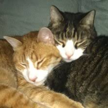renal failure in cats feline kidney disease yes there s ask the cat doctor