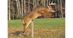 6 reasons bucks shed their antlers