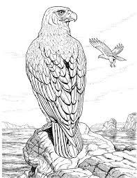 Eagle Animal Coloring Pages 7 Shining Design 0c474b0833916bf5e97b90e8b2fc3d32