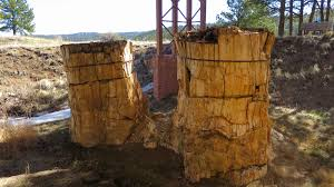 florissant fossil beds national monument colorado another walk