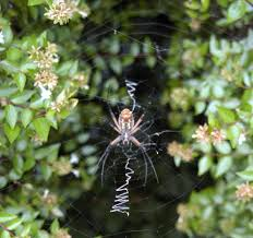 Remains Of The Day Spiders by Dirt Doctor Library Topics