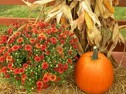 Circleville Pumpkin Festival by Some Of The Best Fall Festivals In Your State Bookotrip