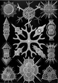 Bones Sinking Like Stones Traduzione by Black Sails 2014 U2014 Art Of The Title