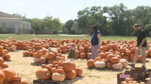 Pumpkin Patch College Station by Brazos Valley Pumpkin Patches Open For The Season