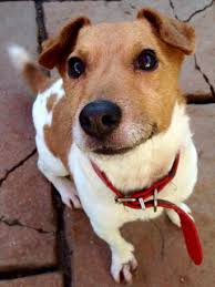 older dogs or rehoming dogs and puppies rehome buy and sell in