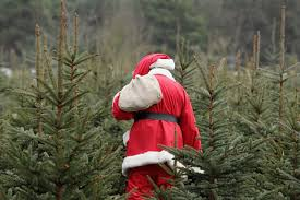 Santa Cruz Christmas Tree Farms by Where To Cut Your Own Christmas Tree In New Hampshire