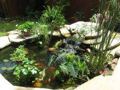 Aquascape Patio Pond Australia by Garden Pond Ideas Idea Box By Empress Of Dirt Melissa Garden