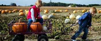 Pumpkin Patch Tampa 2014 by Best Pumpkin Patches In Orange County Cbs Los Angeles