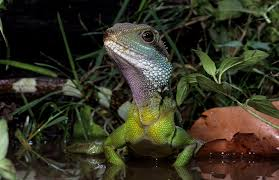 Reptile Heat Lamps Safety by Heat And Uvb Lighting For Pet Water Dragons