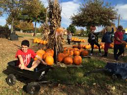 Apple Hill Pumpkin Patches Ca by Extraordinary Living Nashville Mom Cimorelli Blog