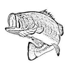Bass Fish Sketch Of Coloring Pages