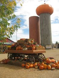 Boulder Pumpkin Patch 2015 by Strong Brewed Business Insight Fall Family Fun At Anderson Farms
