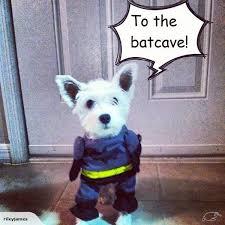 cat batman costume batman cat batman costume 189 trade me