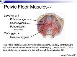 pelvic floor spasms dasmu us