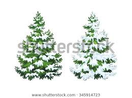 Realistic Vector Illustration Of Fir Tree In Snow On White Background Green Fluffy Pine