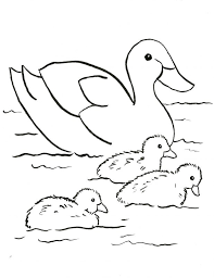 Donald Duck Coloring Pages Pdf Cartoon Mallard Page Free Face