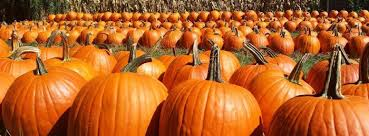 Pumpkin Farms In Belleville Illinois by Don U0027t Miss These 10 Great Pumpkin Patches In Illinois