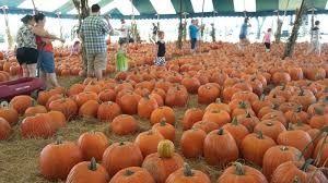 Highwood Pumpkin Festival 2017 by Hunsader Farms Pumpkin Festival Bradenton Florida Youtube
