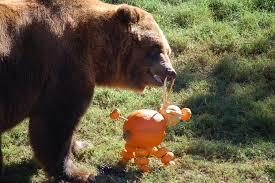 Spirit Halloween Omaha by Zoo Animals Getting Into The Spooky Spirit Of Halloween Kfor Com