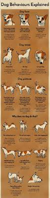 Best 25+ Dog Stuff Ideas On Pinterest | Dog Things, Puppies Stuff ... Cloud Nine Dog Traing Best Houses In 2017 For Both Indoor And Outdoor Use Siberian Husky Costs Facts Infographic Ultimate Guide Farmer Tag Wallpapers Country Children Tractor Fields Farm Dogs Plastic Dog Barnhome Kennel Petshop Online 25 Food Bowls Ideas On Pinterest Project Food Cindee X Stackhouse Owyheestar Weimaraners News 614 Best Australian Cattle Images Blue Heelers 5 Facts About Dogs Deworming The Horse Owners Resource Lonely Escapes Yard To Get A Hug From His Friend Youtube Oakwood Park Morton6711