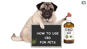 How To Use CBD For Pets   CBD School Best Cbd Oil For Dogs In 2019 Reviews Of The Top Brands And Grateful Dog Treats Canna Pet King Kanine Coupon Code Review Pets Codes Promo Deals On Offerslovecom Hemppetproducts Instagram Photos Videos Cbd Voor Die Diy Book Marketing Buy Cannabis Products Online Mail Order Dispensarygta April 2018 Package Cannapet Advanced Maxcbd 30 Capsules 10ml Liquid V Dog Coupon Finder Beginners Guide To Health Benefits Couponcausecom Purchase Today Your Chance Win A Free Cbdcannabis Hashtag Twitter