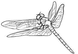 800x555 Cute Picture Of A Dragonfly To Color Free Printable Coloring Pages