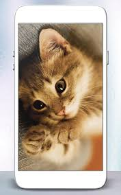 kitty cat kitty cat live wallpaper android apps on play