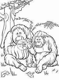 Orangutans Coloring Page For Kids Animal Pages Printables Free