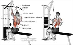 Reverse Pec Deck Flyes With Dumbbells by Reverse Grip Lat Pulldown A Compound Pull Exercise Main Muscles