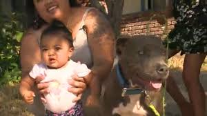 100 Toddler Fire Truck Videos Pit Bull Grabs Baby By Diaper Saves Her From Fire Abc7newscom