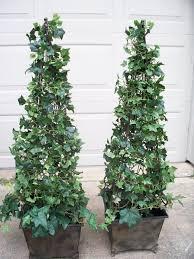 DIY Topiary For The Front Door Entry Home Stuff Topiary Garden