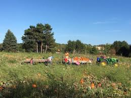 Pumpkin Patches Mankato Mn by The 12 Best Pumpkin Patches In Minnesota For 2016