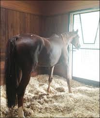 7 Top Tips To Get Rid Of Smelly Farm, Household, And Travel Odors ... Defeat The Enemy Fly Control Options For Horse And Barn Music Calms Horses Emotional State The 1 Resource Breyer Crazy In At Schneider Saddlery Horsedvm Controlling Populations Around Oftforgotten Bot Equine Dry Lot Shelter Size Recommendations Successful Boarding Your Expert Advice On Horse 407 Best Barns Images Pinterest Dream Barn Barns A Management Necessity Owners Beat Barnsour Blues Care Predator Wasps Farm Boost Flycontrol Strategies Howto English Riders