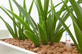 hydrokultur für zimmerpflanzen mein schöner garten