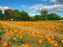 Pumpkin Patch Portland by Guide To Pumpkin Picking In Connecticut I Love Halloween