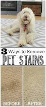 Dog Urine Stains On Hardwood Floors Removal by Best 25 Cleaning Pet Urine Ideas On Pinterest Pet Urine