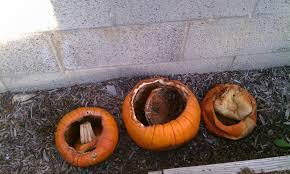 Keep My Pumpkin From Rotting by 100 Keep My Pumpkin From Rotting 8 Tips For Keeping