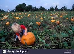 Maryland Pumpkin Patches Near Baltimore by Usa Maryland Fallston Mr Bennett Remsberg Plays In Pumpkin Patch