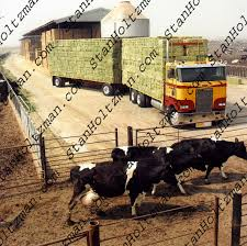 Stan Holtzmans Truck Pictures - The Official Collection - Hauler ... Filerefueling Hay Truckjpg Wikimedia Commons Highway 99 Reopens In South Sacramento After Hay Truck Fire Fox40 Semi Truck Load Of Kims County Line Did We Make A Small Stock Image Image Biological Agriculture 14280973 Boys Life Magazine Old With Photo Trucks Rusty 697938 Straw Trailers Mccauley Richs Cnection Peterbilt 379 At Truckin For Kids 2013 Youtube Hay Train West Coast Style V1 Truck Farming Simulator 2019 John Deere Frontier Implements Landscape Mowing Dowling Bermuda Celebrity Equine Llc