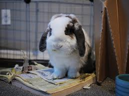 Can Rabbits Eat Roasted Pumpkin Seeds by Can I Give My Rabbit A Phone Book Rabbits Life