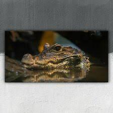 glasbild krokodil ebay