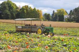 Lane Farms Pumpkin Patch by Activities U2013 Stokoe Farms
