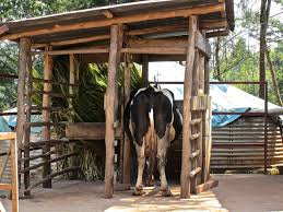 Shed Any Light Synonym by Very Diy Looking Milking Shed Barns And Outbuildings Pinterest
