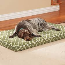 orthopedic dog pad drs foster and smith deluxe orthopedic pad