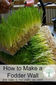 73 Best Farm/Grow Fodder Images On Pinterest | Chicken Coops, Farm ... 25 Trending Lawn Seed Ideas On Pinterest Repair The Beer Portfolio Mowing Ferlization Treatment Pauls Best Goodbye Grass 7 Inspiring Ideas For A No Mow Backyard Artificial 12 Stunning Modern Itallations Install Balinese Garden Bali What Is Carpet How To Grow Things Consider Before Use Edging To Keep Weeds And Away From Flower Beds Hgtv Front Yard Landscape No Grass Pinteres Dwarf Mexican Feather Google Search Desert Landscape Outgrowing The Traditional Scientific American Blog Restore With Dead Soil After 9 Steps