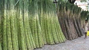 Kids Science Fun Facts On Cuba Sugar Cane Ethanol Production In