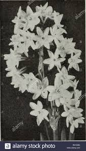 100 Flannel Flower Glass Bulbs And Seeds Autumn 1921 Seeds Catalogs Bulbs Plants