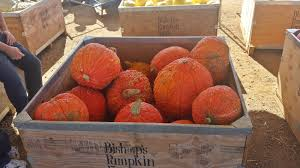 Bishops Pumpkin Patch Wheatland Ca by My Love For Placer County