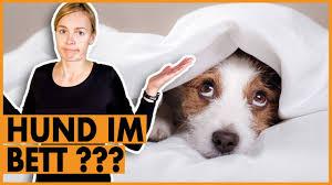 hund verbieten i darf der hund ins bett oder auf die i das solltest du beachten