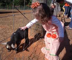 Pumpkin Patch With Petting Zoo by The Cable Clan